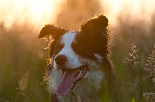 Naming Your Border Collie Photo