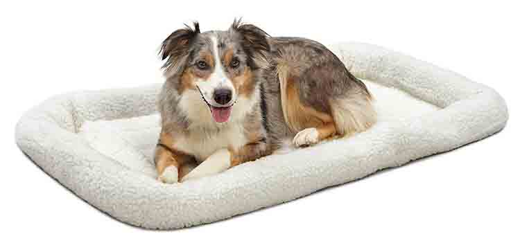 MidWest Deluxe Bolster Pet Bed Photo