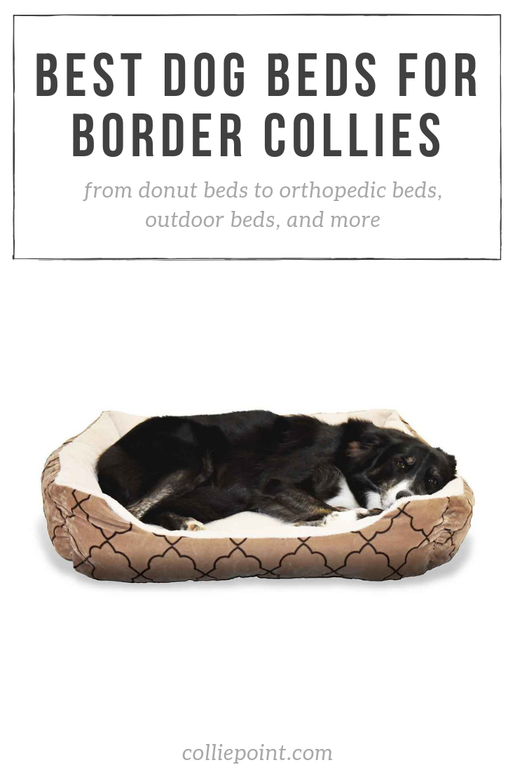 Best Dog Bed for Border Collies Photo