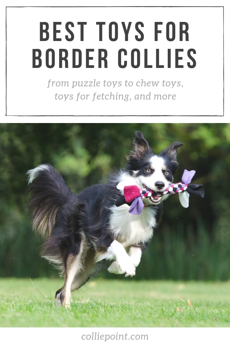 Best Toys for Border Collies Photo