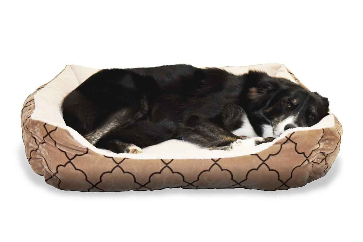 Border Collie in Dog Bed Photo