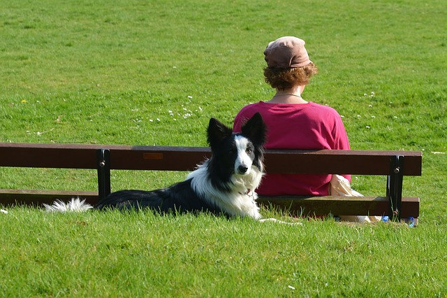 Border Collie at Dog Park Photo