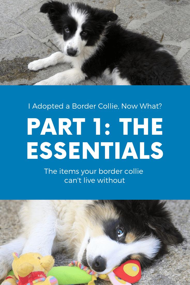 Part 1: The Essentials Photo