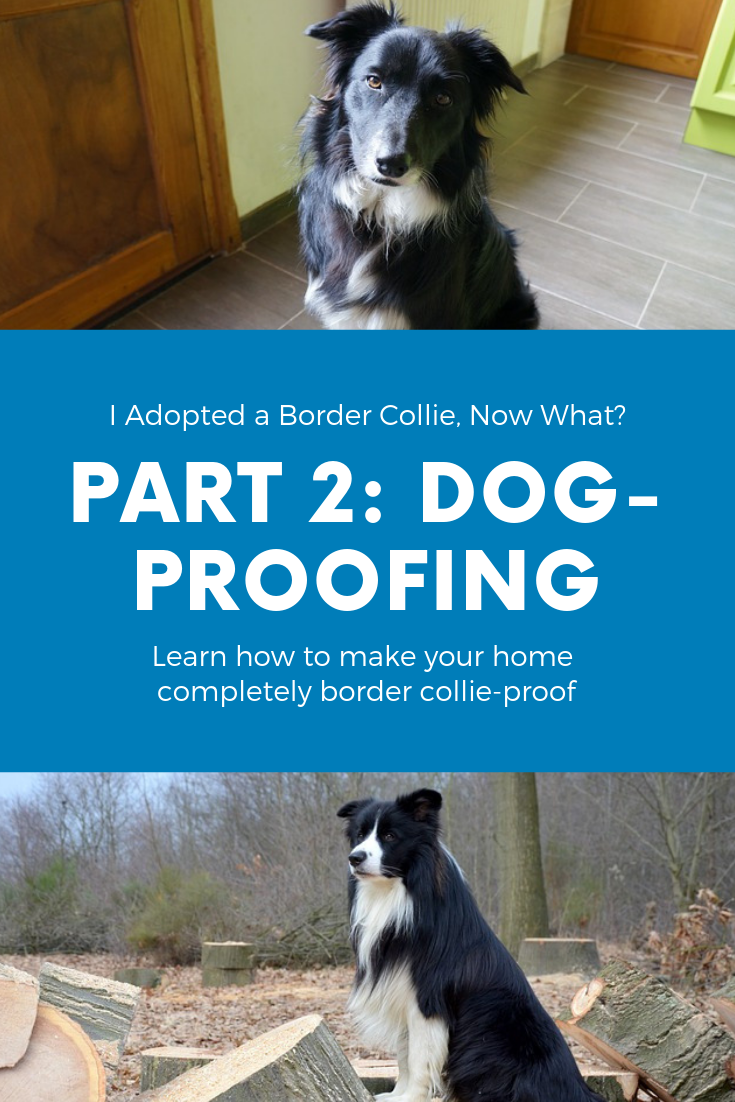 Dog-Proofing Your Home Pinterest Photo