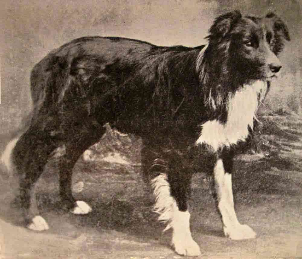 Old Hemp Photo